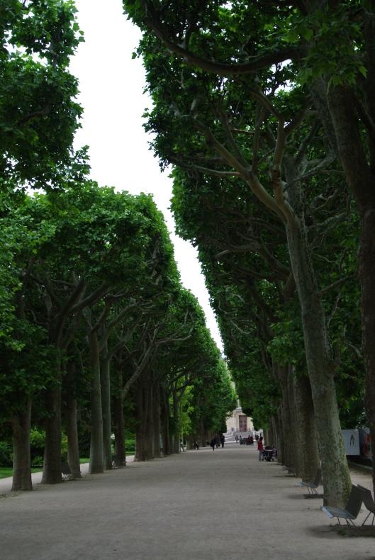 The avenue in the Jardin des Plantes.